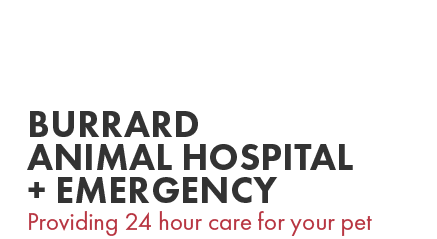 Logo for Burrard Animal Hospital & Emergency Vancouver, British Columbia